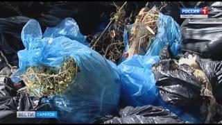 видео Год экологии: школьные мероприятия