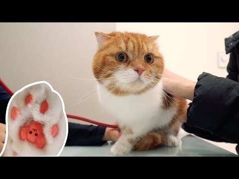 긴장해서 발바닥이 빨개진 고양이 노을! feat. 달수