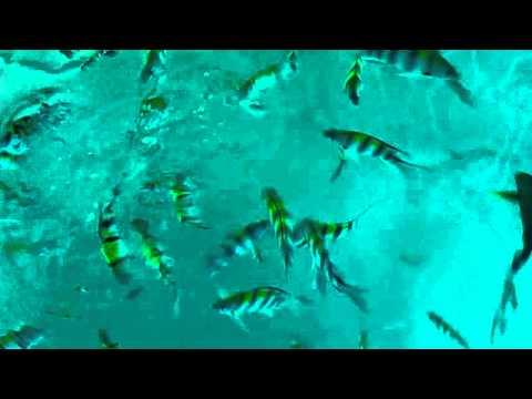 Looc Romblon Fish Sanctuary