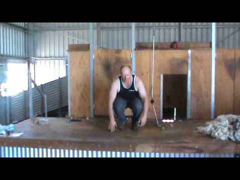 Prevention of Injury while shearing Exercises and Stretches to keep you supple   YouTube