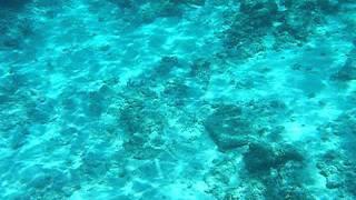 サバニでコマカに行きました。 透明度ばっちりです!