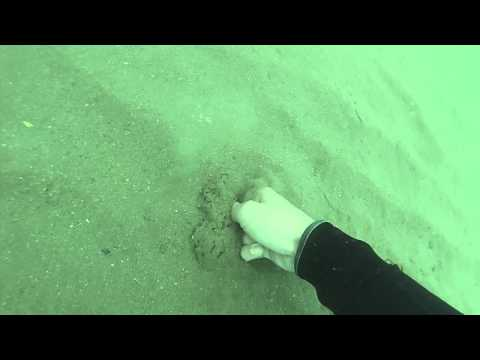 How to catch razor clams under the water | Free diving Ireland | Sea foraging