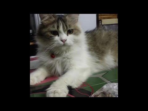 cats  petshop moment