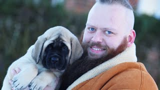 We Bought The Worlds BIGGEST Puppy! Eileen The English Mastiff!