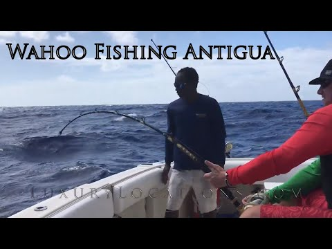 Antigua Wahoo Fishing - Double Header By Luxury Locations Magazine Antigua
