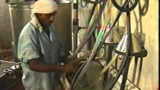 Modern Dairy Farm.mpeg