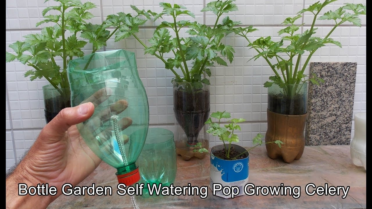 Make Self Watering Planters Bottle Garden Self Watering Pop Celery