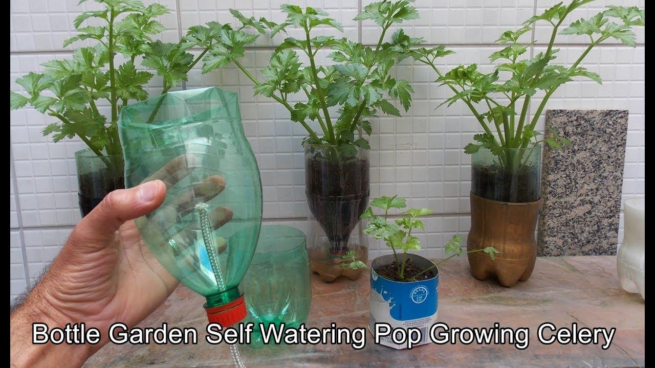 Bottle Garden Self Watering Pop Celery Youtube