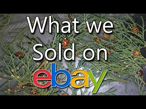 what-we-sold-on-ebay---used-sunglasses,-ice-crusher,-vintage-bibles---dorky-thrifters