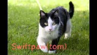 All Thunder Clans Cats~PLEASE WATCH!!!