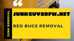 Bed Bug Removal in Furniture Dallas Texas