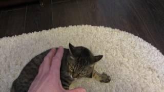 Кот КУЗЯ подает голос. Разозлившийся кот.