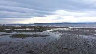 Chasing Sea Gulls at Edmonds Off-Leash-Area