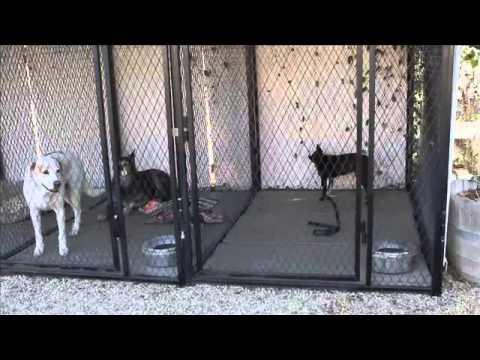 Stop Aggressive Dog Behavior Los Angeles-Aggressive Boston Terrier