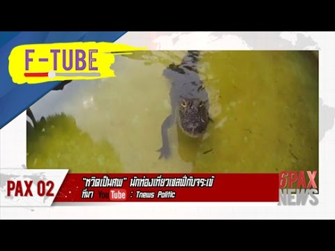 "6 PAX NEWS : ""หวิดเป็นศพ"" นักท่องเที่ยวเซลฟี่กับจระเข้ #F-TUBE"
