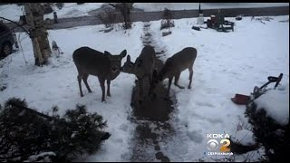 Mt. Lebanon Commissioners Hold First Meeting Since Deer Culling Plan Went Into Effect