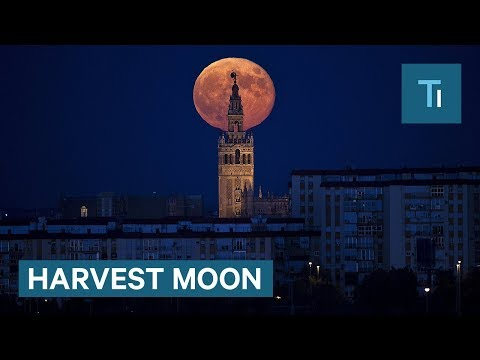 What a harvest moon actually is and why it is so unusual this year