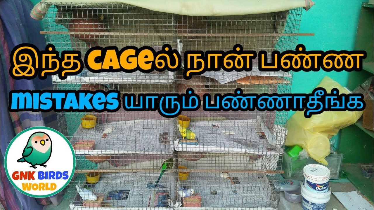 What I made mistakes in my budgies cage in தமிழ்