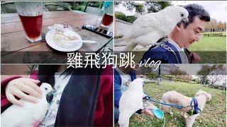 [寵物鸚鵡]來去北藝大走春, 溜毛小孩的好去處