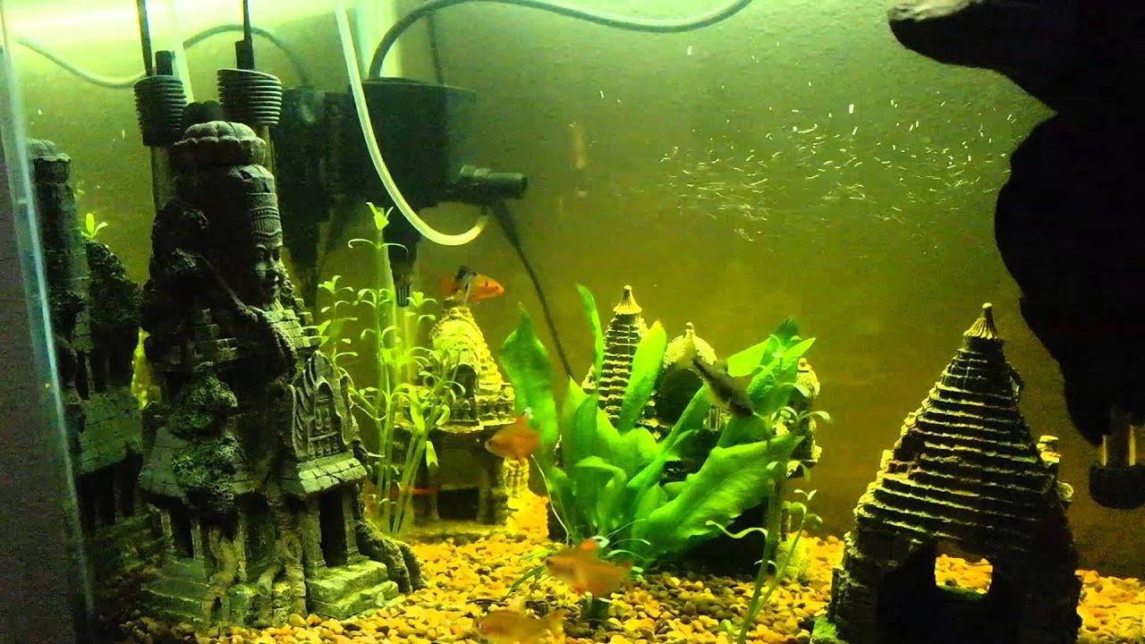 75 gallon fish tank set up