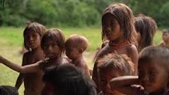 Dans la forêt amazonienne, les Indiens Yanomami victimes de la ruée vers l'or