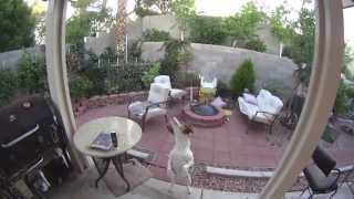 My Beagle In Slow Motion