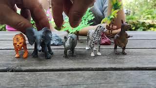 Cinque Scimmiette Saltavano Sul Letto.Scimmiette