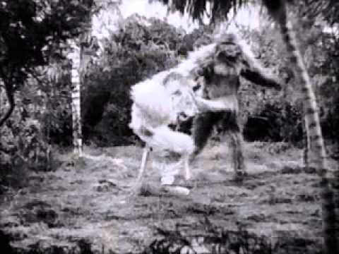 GORILLA VS LION FIGHT!!! (REAL) - YouTube