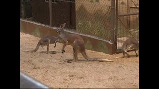 Emperor Valley Zoo: Animals Protected From Noise Pollution