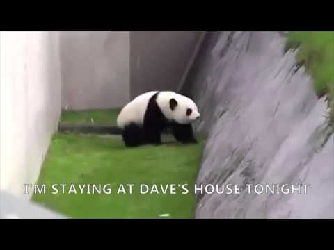 Carl Drunk Panda