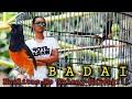 Murai Batu Juara Roll Sujud Badai Jadi Buruan Kolektor  Mp3 - Mp4 Download