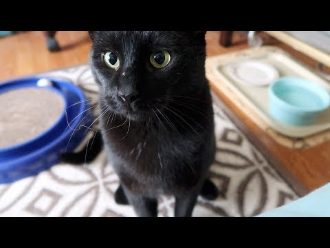 Boo Day 136 - Western Blot FIV Test Results - Training And Socializing A Feral Cat