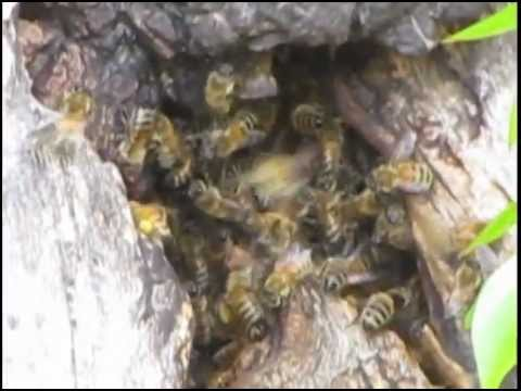 Wild Bee hive at the Community Garden..