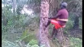 guitara tradicional
