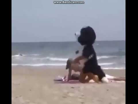 Секс женщин с dog video онлайн