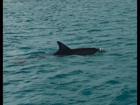 Dolphin Comes to Say Hello at Hog Cay Long Island Bahamas