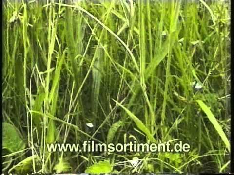 Biologie: ÖKOSYSTEM WIESE (DVD / Vorschau)