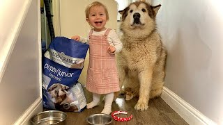 Baby Learns To Feed Dogs But Thinks They're On A Diet!! (CUTEST EVER!!)