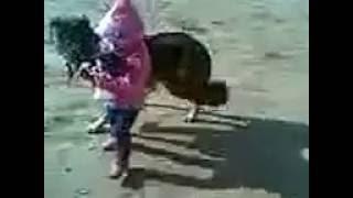 как мать защищает своих шинков