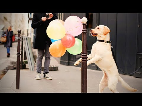 Cats and Dogs Vs. Balloons 🐱🐶 Funny Cats and Dogs Playing Balloons(Part 1) [Funny Pets]