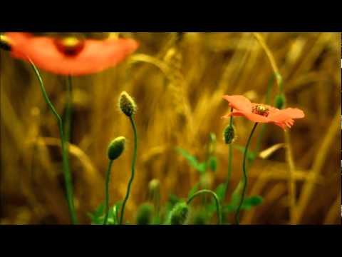 Клип Gregorian - The Gift