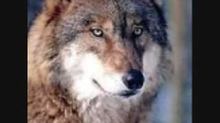 Peter Maffay -Wölfe