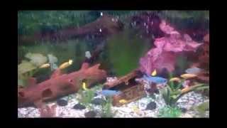 видео аквариум под ключ в Киеве