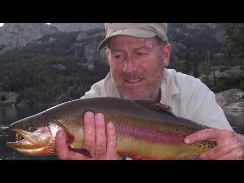 Wyoming Golden Trout