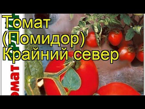 Томат Крайний север. Краткий обзор, описание характеристик solanum lycopersicum Krajnij sever