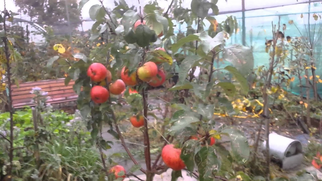 1 how to start a fruit orchard sourcing trees youtube