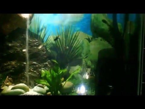 Aquascape | Akuarium Terindah ??? - YouTube