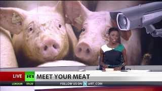 Ham Cam: German farmer gives customers pig pick before eating