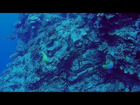 Molokini Back Wall Diving, Maui, Hawaii, 2018 - Lahaina Divers