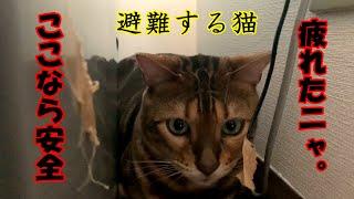 御視聴ありがとうございます♪ ベンガル猫のコテツ君に遊んでもらいましたw 相変わらずのおりこうさんの猫ですが 今回は激しすぎたのか・...